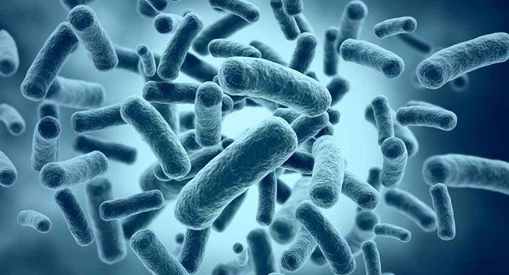 Mikroorganizmi u procesu proizvodnje bioplina