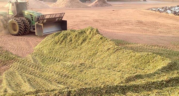 Savjeti kod spremanja kukuruzne silaže za proizvodnju bioplina