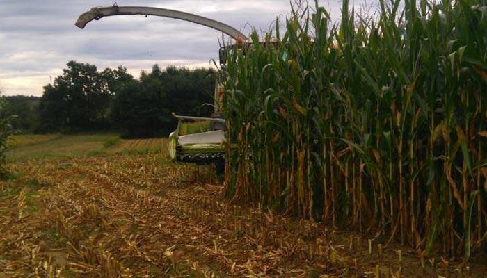 Utjecaj gnojidbe digestatom iz bioplinskog postrojenja na prinos silažnog kukuruza