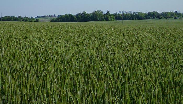 Savjetovanja vezano uz upravljanje poljoprivrednom proizvodnjom ratarskih kultura